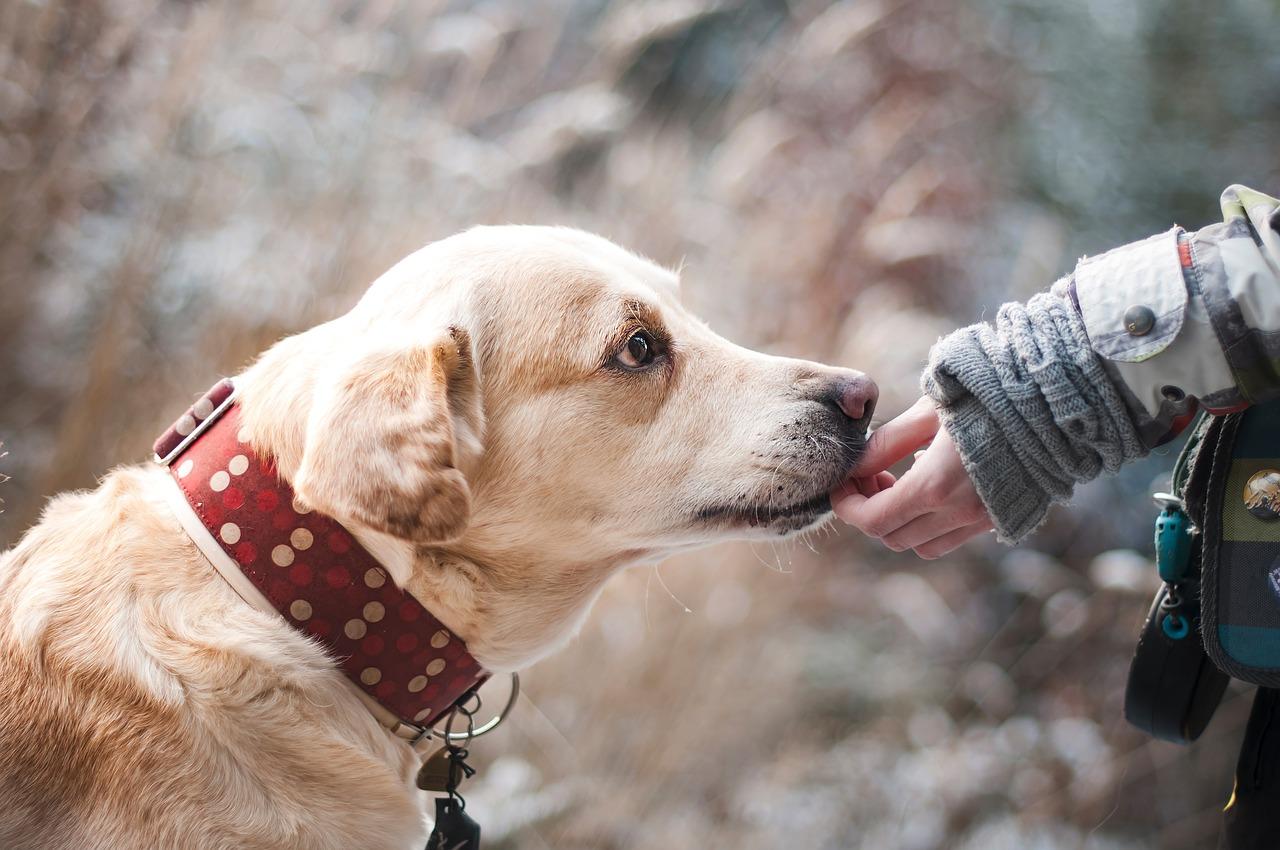 Psy jako zwierzęta domowe