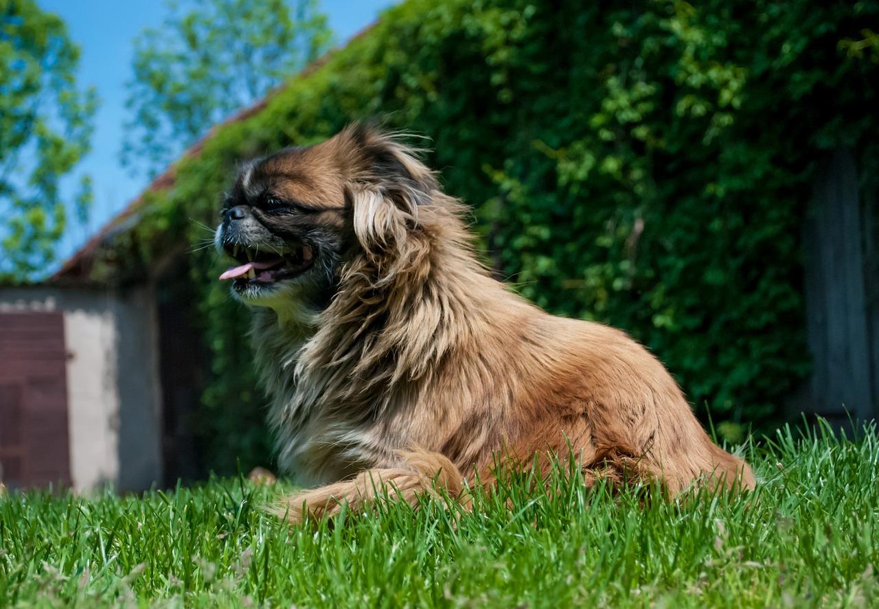 Doskonały pies dla seniorów