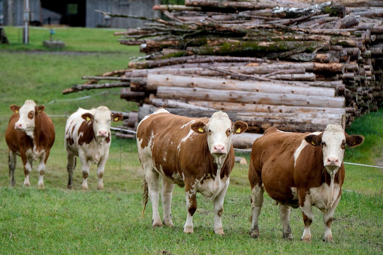 Wysłodki buraczane, dla zwierząt hodowlanych. Wszystko, co należy wiedzieć, przed ich zakupem i zastosowaniem.